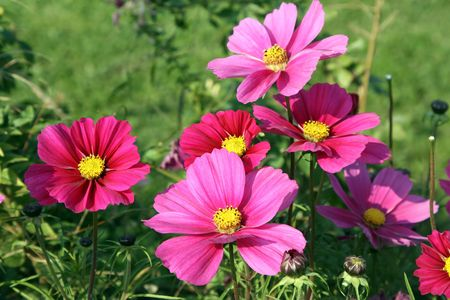 florets: Pink florets