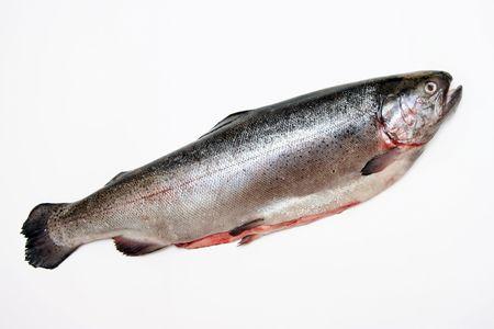 Fresh salmon. Isolation on white.