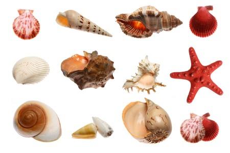 starfish and seashells  isolated on white background Stock Photo