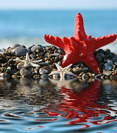 Starfish on a background of the dark blue sea photo