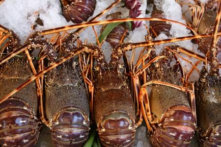 Fresh lobsters lie on ice