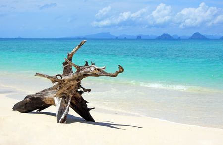 vacationing:  tropical beach: tree trunk left on the sand. Stock Photo