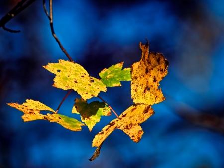 하늘 배경에 일시 중단 된 가을 잎