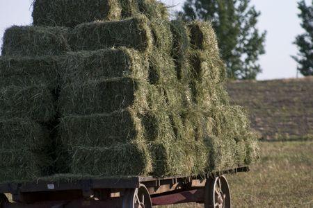 Amish hooi baal