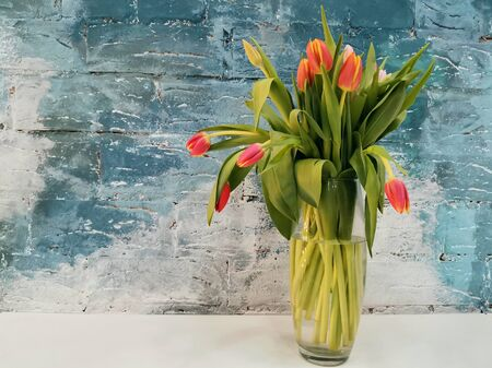 Pink tulips bouquet in white vase on blue background. Holiday background, copy space, gorizontal photo. Valentine Day, Mothers day, birthday concept.