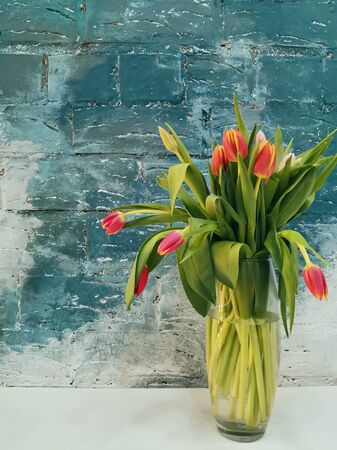 Pink tulips bouquet in white vase on blue background. Holiday background, copy space, vertical photo. Valentine Day, Mothers day, birthday concept. Stok Fotoğraf
