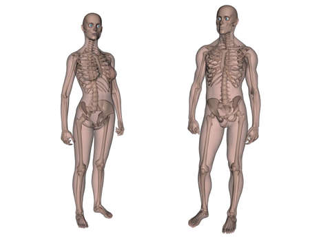 Anatomy. Female and Male skeleton Stock Photo