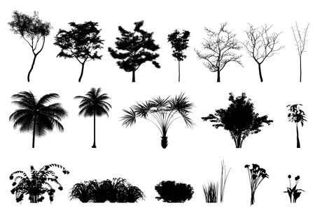 Silhouette: trees, plants and flowers  Stock Photo