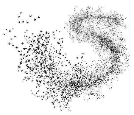 bird fly: A flock of seagulls