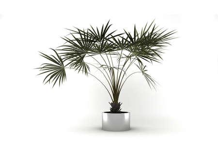Plant in the vase Stock Photo