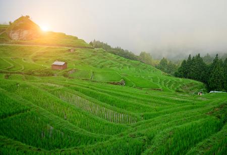 yuan yang: Japan Rice Field Terrace