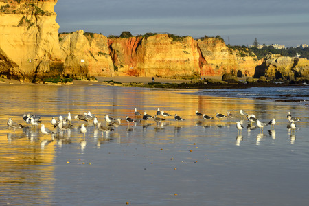 rocha: Birds sunbathing. Praia da Rocha, Faro, Portugal