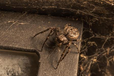 big: Big Spider Stock Photo