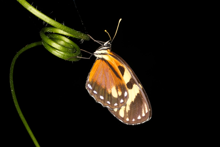 tropical: Tropical Butterfly Stock Photo
