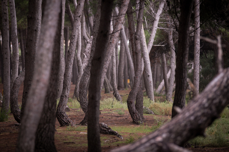 sidelit: Gorgeous stretch of forest, side-lit and full of gesture, drama, and mystery. Stock Photo