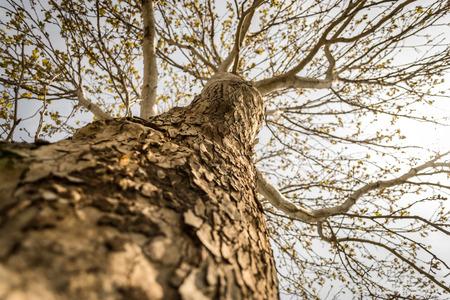 populus tremuloides: Colorado Scenics Stock Photo