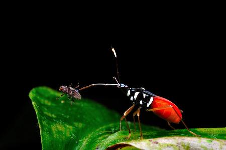 Macro of beetle