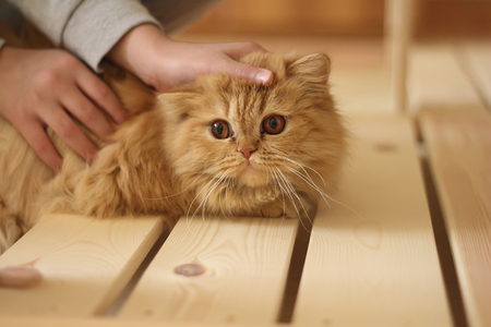 caresses: Hand of person stroking head of cute cat