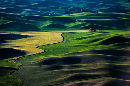 The rolling wheat fields. Location in Steptoe, Washington, United States