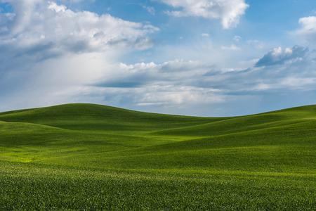 Eastern Washington Wheat. Location in Risbeck, Colfax, Washington
