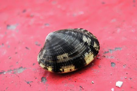 Sea shell closed