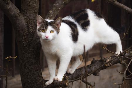 Beautiful cat on a tree