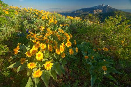 Picturesque view of beautiful nature Reklamní fotografie