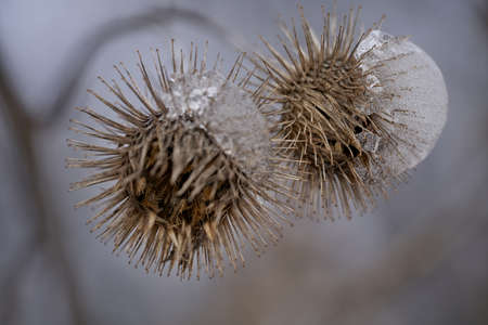 frozen plants macro in winter covered with frost