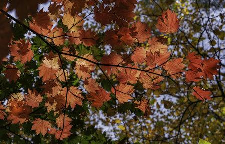 Fall colors at Mount Wilson Фото со стока