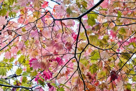 Mount wilson fall colors Фото со стока