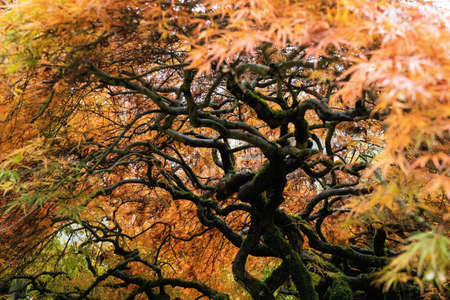 Under the canopy. Portland, Oregon. Фото со стока