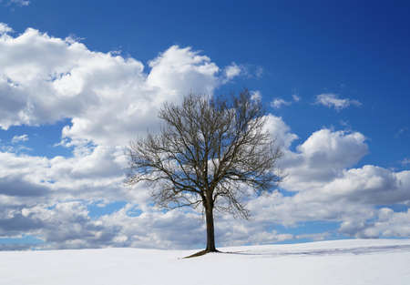 A Branchy, Lonely Tree Standing On A Snowy Hill A Sunny Day Against The Blue Sky With White Clouds 版權商用圖片