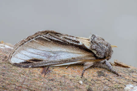 Swallow Prominent Stock Photo