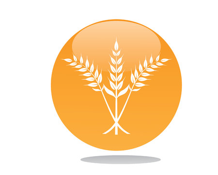Oat or rice logo Illustration