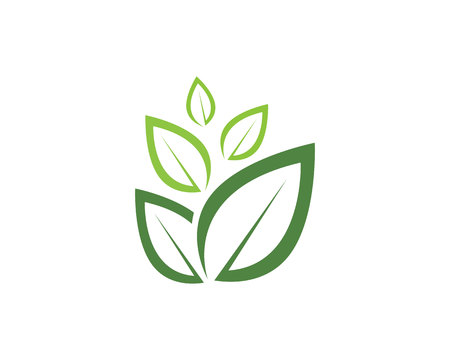 leaf green nature  symbol template