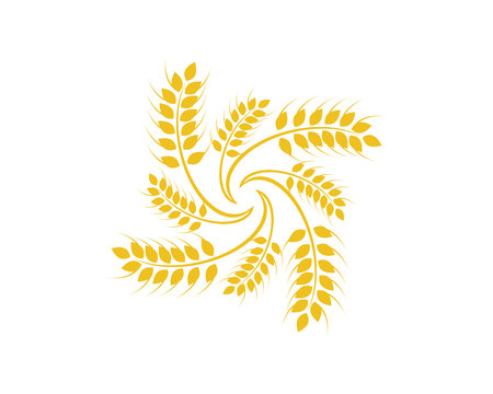 Agriculture wheat icon template.