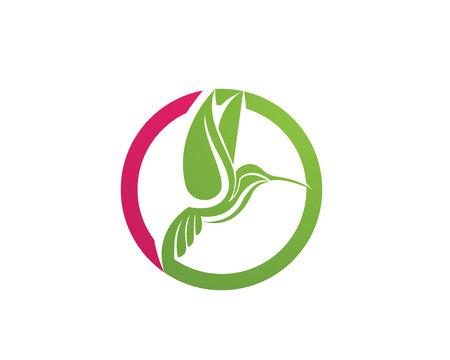 Hummingbird Logo and symbols iconsTemplate app