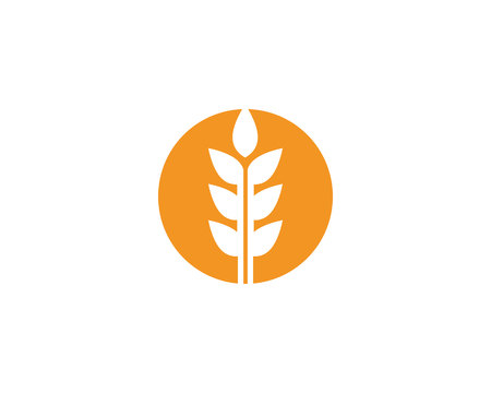 Wheat logo vector