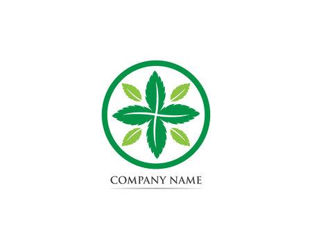 Logo e simbolo foglia di menta