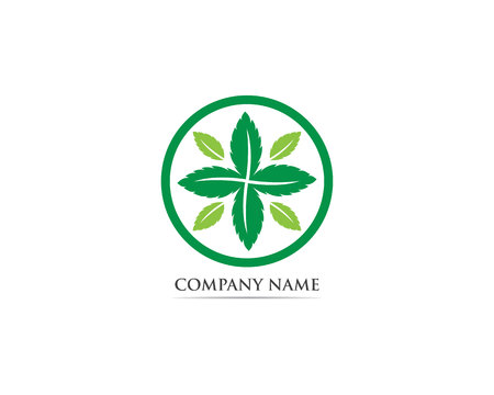 Mint leaf logo and symbol