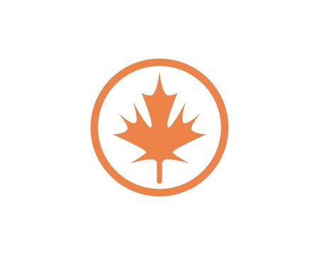 Maple leaf vector illustration design template