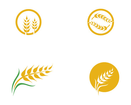 Conception d'icône de vecteur de blé de l'agriculture