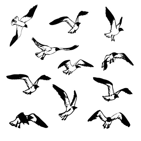 Hand drawn flying seagulls. Black and white illustration sketch.  Birds in flight. Seagulls for decor or print. Drawings representing different phases of a bird flight