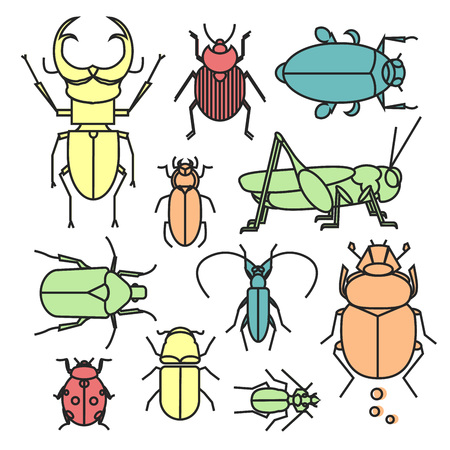 Colorful linear collection of different bugs and beetle. Cute flat insects in geometric style..