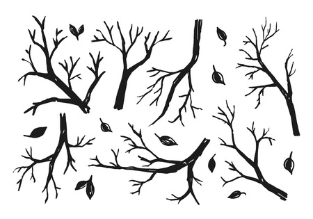 Sketch of trees branches on the white background.