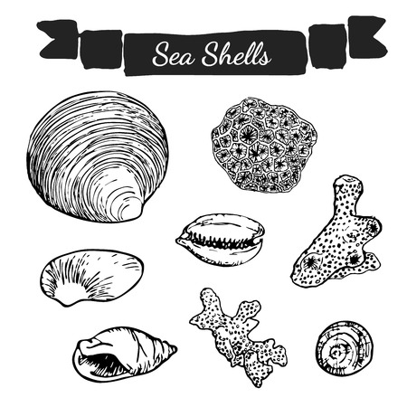 Hand drawn illustration of sea shells and corrals on the white background.