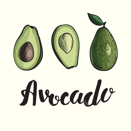 Illustration of avocado fruit in section and whole with hand drawn lettering. Green organic healthy food.