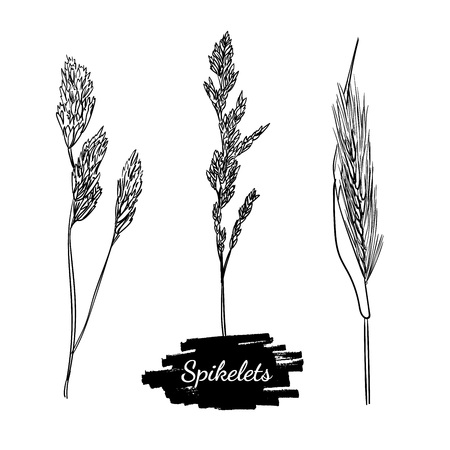 Drawing of different spikelets and twigs. Spica set sketch on the white background. Hand drawn herbs and grasses. Silhouettes of different plants.
