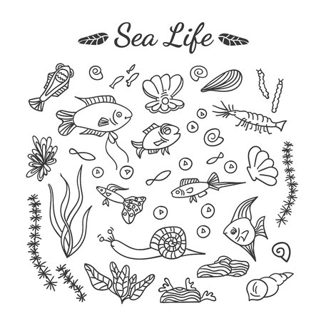 Hand drawn illustration of different underwater elements: fishes, shells, water plant, shrimp, pearl. Aquarium life icons with freshwater dwellers.  イラスト・ベクター素材