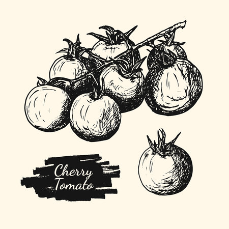 Drawing illustration of cherry tomato. Vintage style food ingredient for cooking. Hand drawn tomato sketch Illustration
